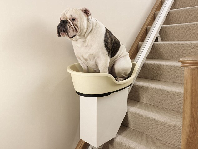 Chunky the bulldog is pictured in the world's first stair lift for overweight dogs. The prototype product could soon become commonplace in British homes as MORE TH>N Pet Insurance predicts that over half of all dogs will be severely overweight by 2022 and unable to climb a simple set of stairs.